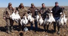 Deadly Decoys™ snow goose decoys worked today!