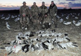 A successful early March snow goose hunt in Missouri.