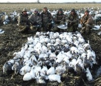 Here is another big field on March 11, 2009. This groups of hunters shot 145 snow geese.