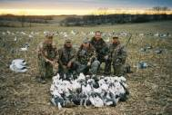 Here is a late March Missouri snow goose hunt... 48 snow geese.
