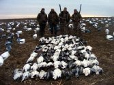 Our second largest day on our 2011 snow goose hunts. One hundred three snows shot by 6 hunters.
