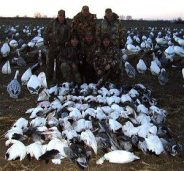 These snow goose hunters are members of the Rathjen party. Not only did they get 75 snow geese but a bonus Blue Neck Collared Ross.