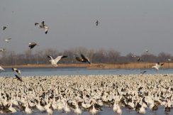 Squaw Creek National Wildlife Refuge