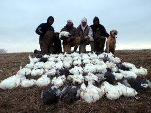South Dakota snow goose hunt. Fifty-one birds shot this day.