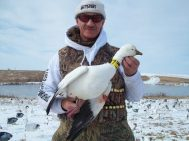 Up North Outdoors snow goose guide Curt Schrader with a neck collar he shot. You will not harvest any birds if you don't stay in the field. On their last day Curt's party decided it was too cold to hunt so he hunted by himself and was rewarded with this ross goose. He's lucky and shoots more banded birds than anybody I know.