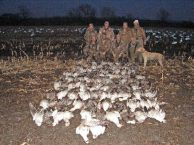 Here is a late February Missouri snow goose hunt. They shot 101 snows and it is also the day the white neck collared blue was shot.