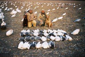 Dave 36 birds