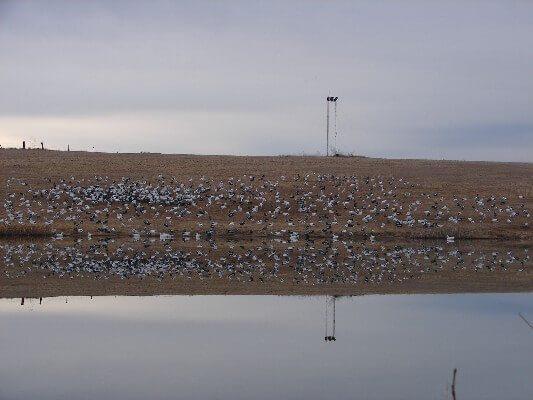 Pond Spread