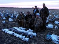 Snow Goose windsock decoys