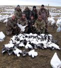 Here is a South Dakota snow goose hunt where we hunted a pasture.