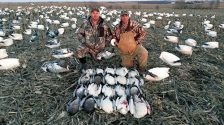 Spring Snow Goose Hunts 2014_097
