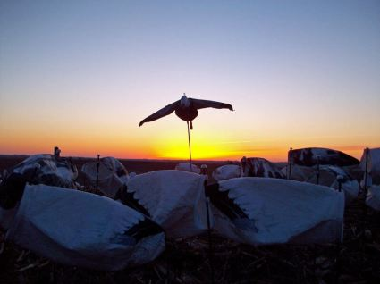 Sunrise over the snow goose decoys