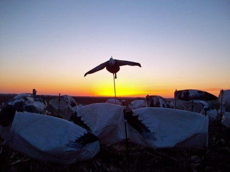 Sunrise over the snow goose decoys