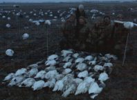 Snow Goose Migration