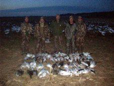 snow geese 2011