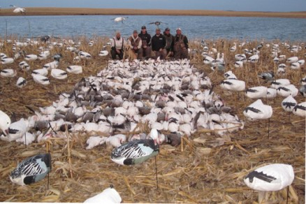 This is the best day we have ever had snow goose hunting. It was a guides hunt in ND with 7 hunters. We shot 263 snow geese and 4 banded birds.