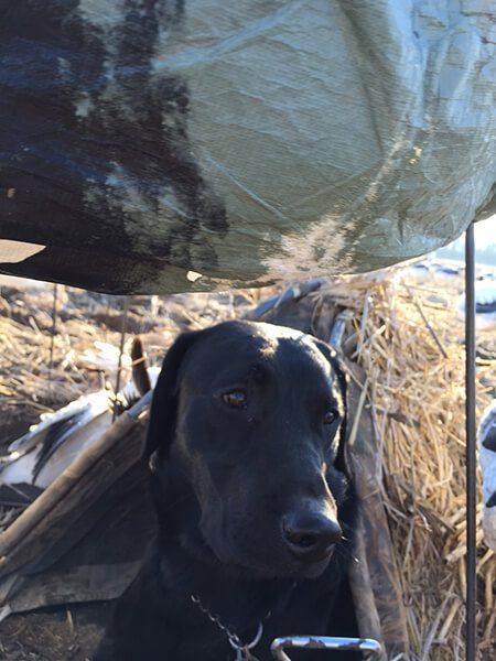 IMG_0083 Arkansas 2015 Snow Goose Hunt