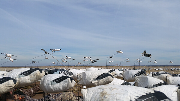 Snow Goose Flyers