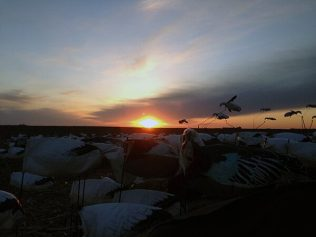 Sunset over Snow Goose Flyers