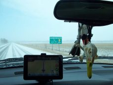 Welcome to Nebraska Snow Goose Hunting