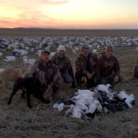 Spring Snow Goose Hunting Www.huntupnorth.com 267