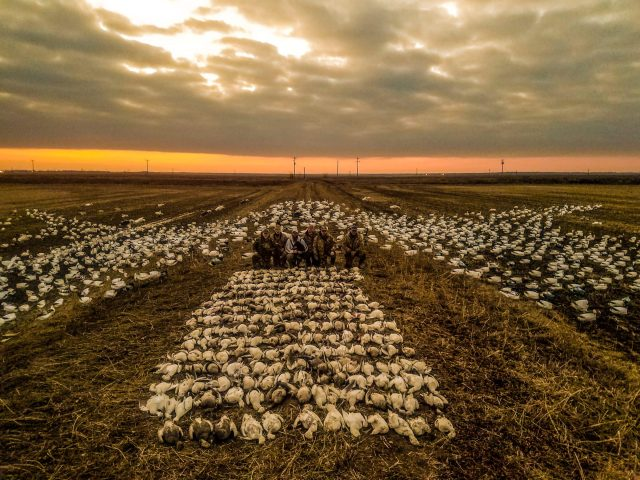 Arkansas snow goose hunts including Iowa