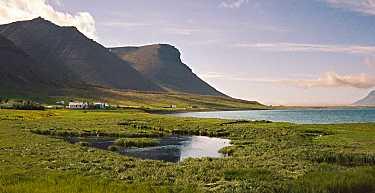 Seftjorn in Haukadalur