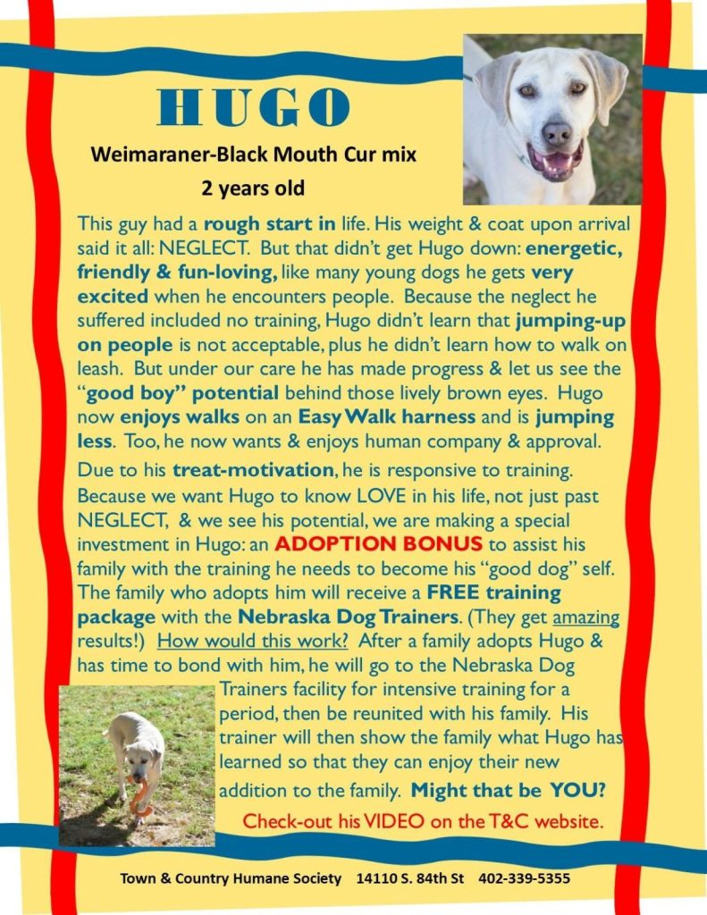 Hugo - Town and Country Humane Society - Husker Home Finder Team