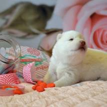 bébé-galak-blanc