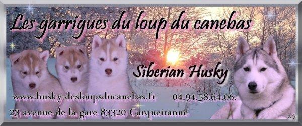 Contactez l'élevage de husky des Garrigues