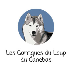 Husky des Garrigues