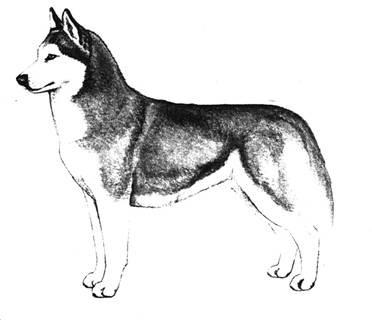 www.husky.lv