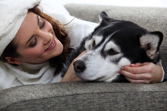 Siberian Husky On Couch In An Apartment