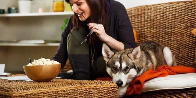 Siberian Huskies In Apartments