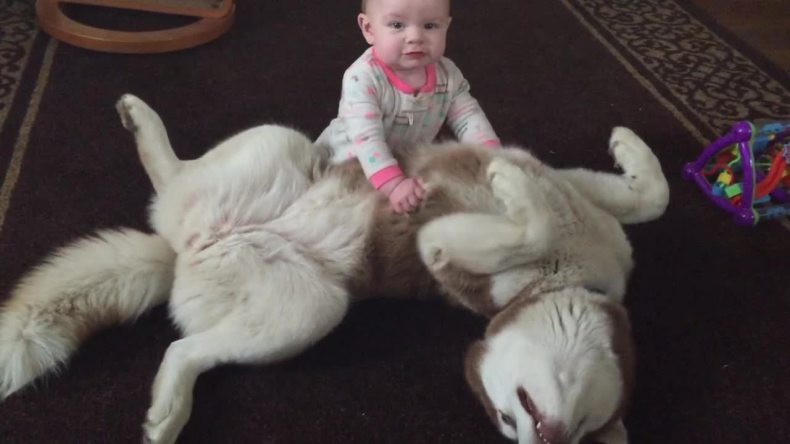 are siberian huskies good with kids