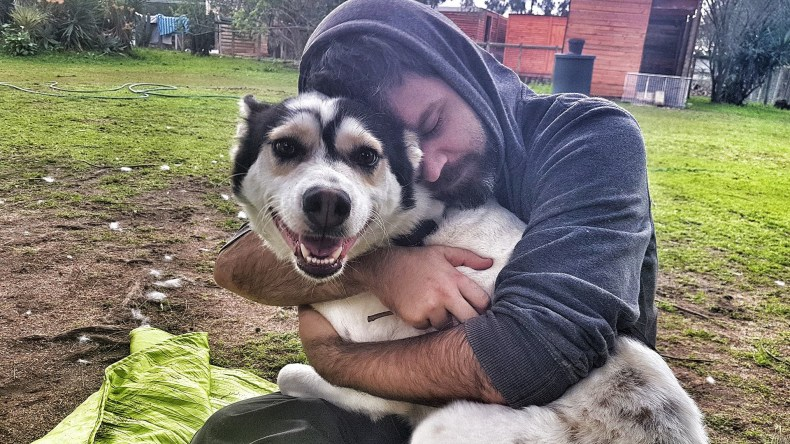 Adopt Santa Husky Rescue South Africa