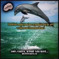 Delfíni používají jména