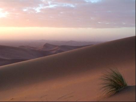 aGENCE-desert-moley.jpg
