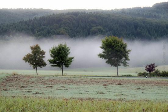 Morgennebel im Fischbachtal