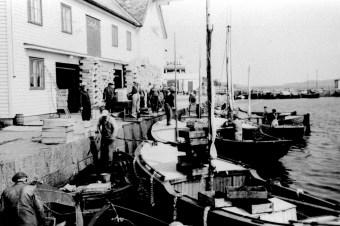 Makrellaget i Sandøsund