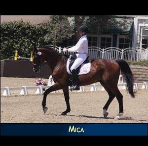 SALE HORSE MICA