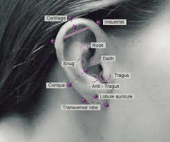 cartilage piercing diagram total beginner ab workout ear types danfers and risks healing picture of