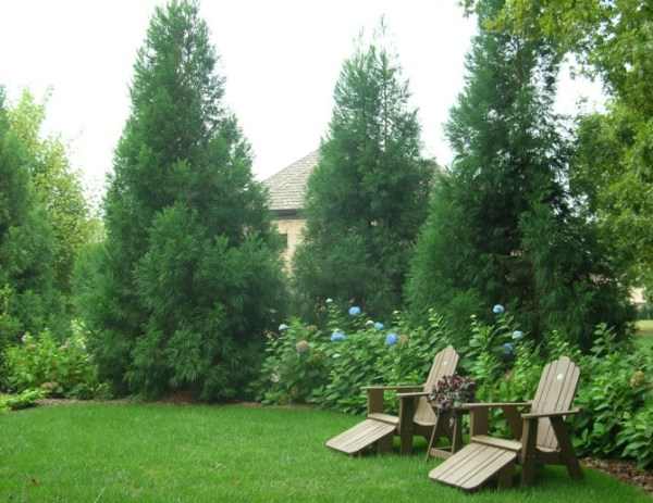 privacy plantings in charlotte