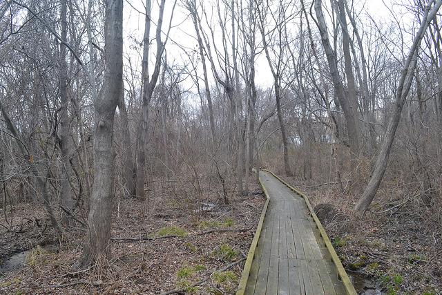 Magruder Park Hyattsville trees path