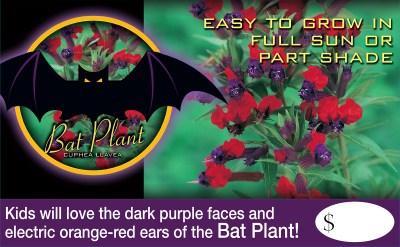 Bat Plant