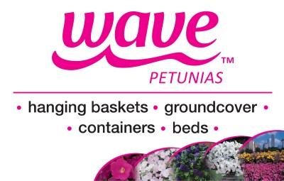 Wave Petunias