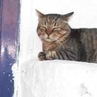 CatDove