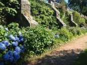 hydrangea path 2