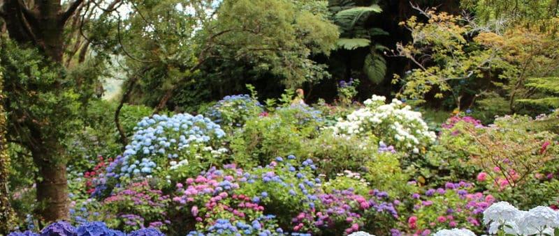 What plants go well with hydrangeas - Companion plants