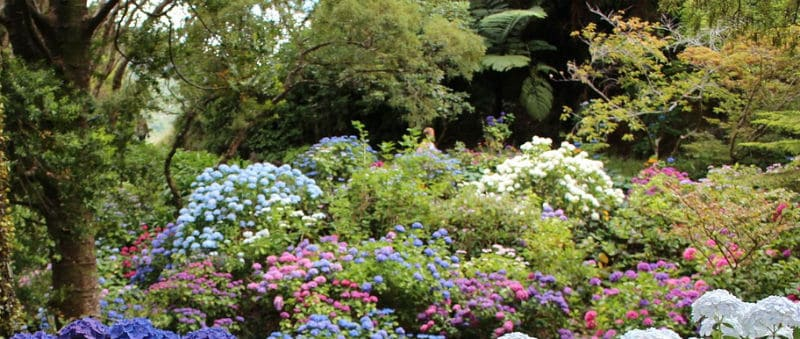 What plants go well with hydrangeas - Companion plants